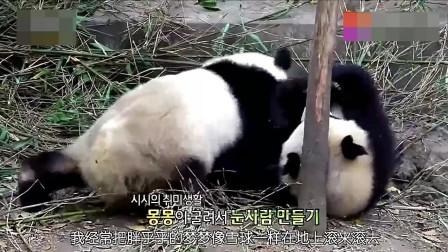 熊猫双胞胎打打闹闹,熊猫妈妈上去劝架