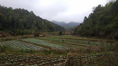 客家小伙把荒地变成了绿地种植了200棵茶树一分耕耘一分收获