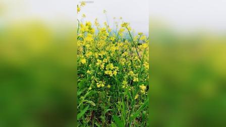 好漂亮的花[图片评论