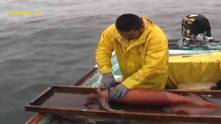 海捕巨型鱿鱼,现场宰割和市场流通过程