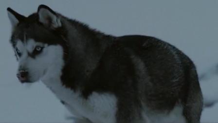 零下八度:狗狗独立求生一百五十二天,偷吃被赶走