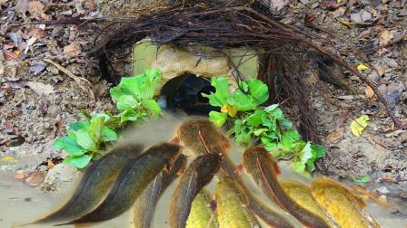 农村小伙河里捕鱼,看看他是什么做的陷阱,能让鱼儿自个进去?