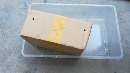 开箱5000只有营养的面包虫,可惜我家鹦鹉不爱吃,结论鹦鹉不吃虫