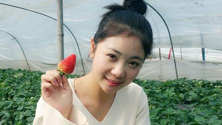 摘草莓的小姑娘,体验采摘的乐趣,还是自己摘的吃起来更甜