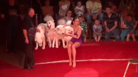 马戏表演主角都是马?顶级狗狗马戏团,带你领略有趣的表演