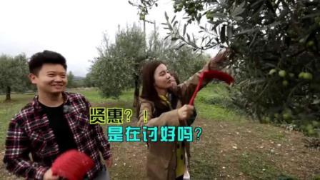 希腊橄榄园劳作,竟用这个来摘橄榄,不知是谁发明的这个创意呢!