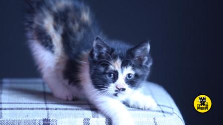 丑猫黄富贵成长日记(4):训猫要趁早,口令要记牢,幼猫投食口令训练要领
