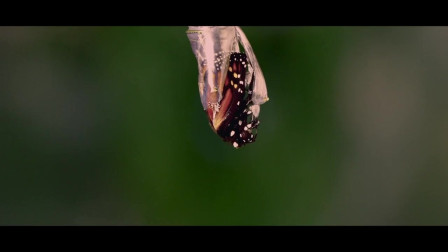 《蝴蝶树》,唯美的下,父亲和儿子同时遇见了她,却不得不接受命运的安排
