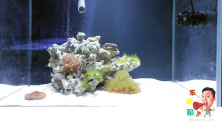 海缸的控藻:甲藻(褐色菌膜&菌丝)