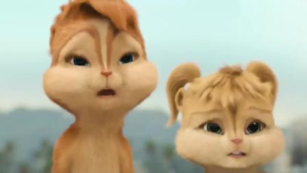 鼠来宝:三只女花栗鼠萌萌哒上线,可爱爆棚
