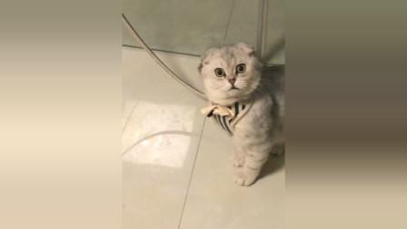 猫猫为什么会这么看着我?有点慎的慌