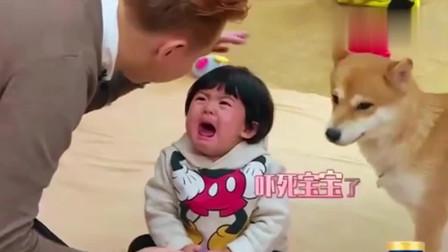 妈妈是超人:狗狗张大嘴舔波妞脸,小波妞被吓得委屈大哭,泪汪汪的大眼好萌!