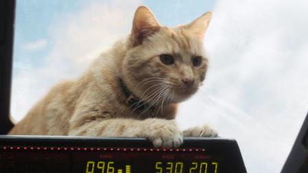 """《惊奇队长》揭秘""""复联""""名字由来,橘猫或将成打败灭霸的关键?"""