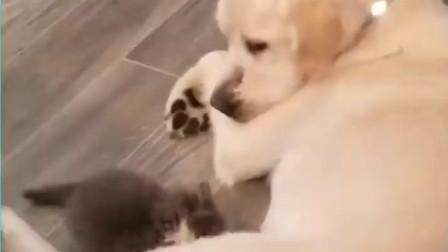 国外恶搞动物视频