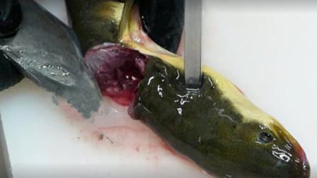 鲜活的鳗鱼,在韩国大姨手下瞬间变美食,馋的路人直流口水
