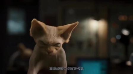 光影颂:喵星人自制机器猫,企图把全球汪星人变成疯狗