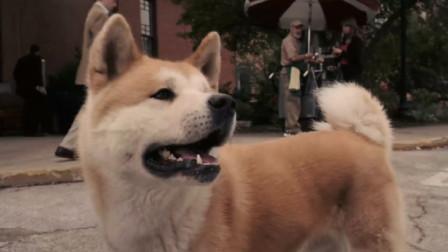 忠犬八公物语 ,等候是最深情的表白