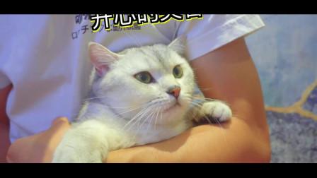 人和猫总有一个会疯,铲屎的想把喵做成广式炖猫汤!