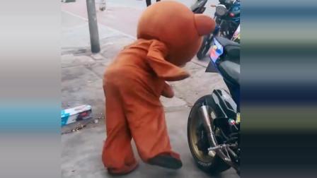机车摩托:网红熊真没出息,第一次看见机车,就被人家吓成了这样!