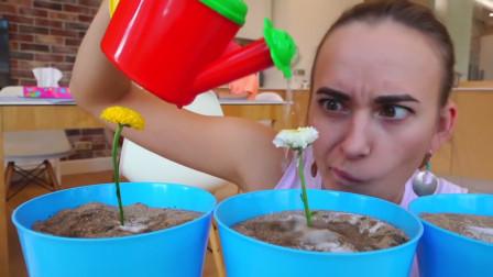 萌娃们有样学样,小家伙们悄悄的在妈妈的花盆里种棒棒糖,效果棒棒哒!