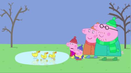 小猪佩奇全集:一起喂鸭子,鸭子真能吃,是吃货哦