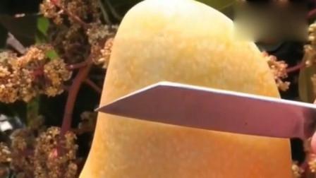 新鲜采摘的大芒果,一刀切开后,看着好想吃一口!,网友:啊来一口