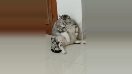 主人想要猫咪少吃一点,怕猫咪变胖,但猫咪胖了还要吃