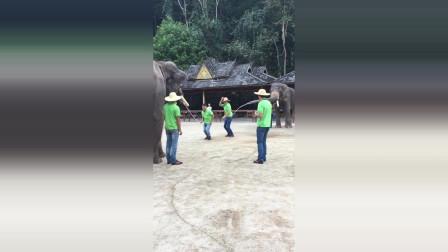 用大象来跳绳,太厉害了