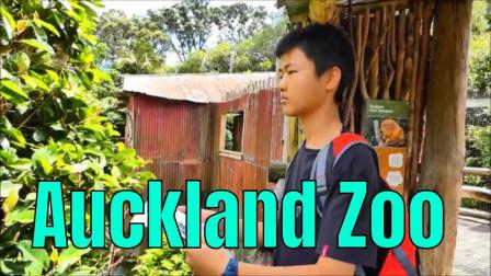 游玩奥克兰动物园