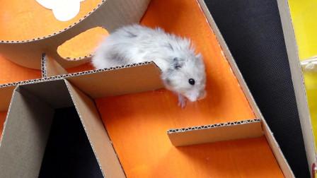 趣味DIY,达人用硬纸板制作仓鼠迷宫,小仓鼠它能走出来吗?