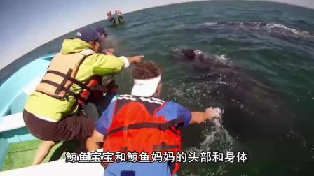 人们把手放在鲸鱼身上 接下来一幕让他们永生难忘!