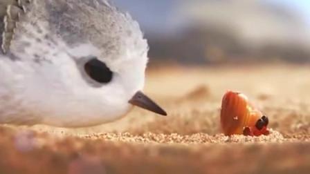 第89届奥斯卡最佳动画短片——《鹬》,短短六分钟,皮克斯耗时三年创作。栩栩如生、温暖治愈系