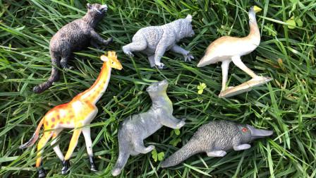认识鸭嘴兽等野外陆地动物,乐宝识动物