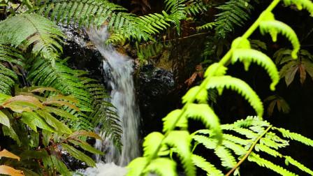 来自大自然的声音,森林里的小溪和瀑布
