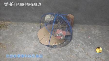 牛人自制铁网捕鼠笼, 为什么抓到了老鼠, 网