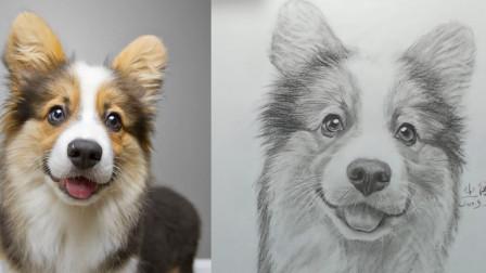名师动物头像素描,超级可爱的小短腿