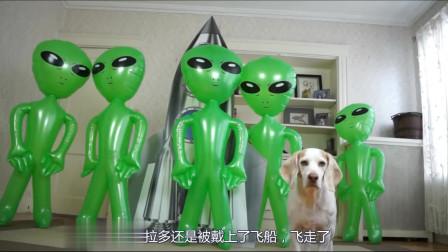 主人恶搞,狗子遭遇外星人绑架,狗狗的反击亮了,视频记录全过程