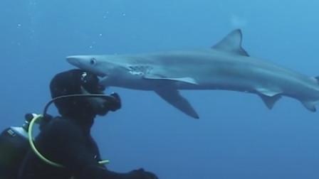 奇妙!被鲨鱼亲吻是什么感觉?