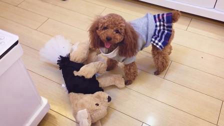 没想到外表柔弱的狗狗,竟对玩偶做出这样的事情!