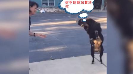 搞笑动物界:信不信我站起来顶死你!