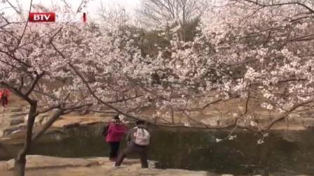 春花提前一周开  北京植物园桃花正怒放 首都经济报道 20190320