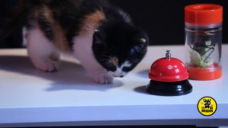 """丑猫黄富贵成长日记(12):对黄富贵""""按铃讨食""""的训练已经进行两天了,找来陪练也无用"""
