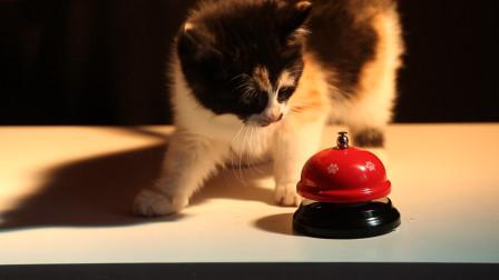 """丑猫黄富贵成长日记(12):黄富贵用了三天的时间学会""""按铃讨食"""",主人的耐心都磨到底线了"""