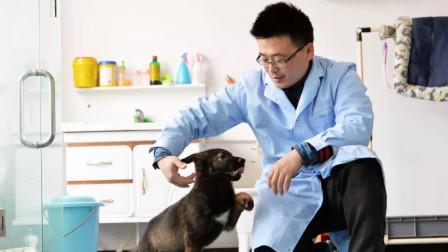 不只是俄罗斯,中国也开始搞克隆警犬?第一只已开始训练!
