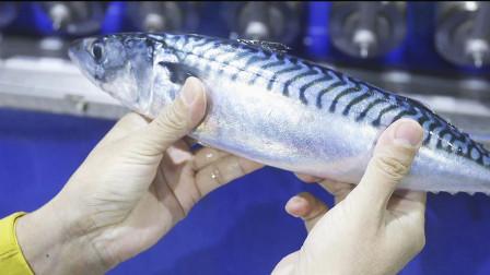 挪威渔船围网捕捞成吨青花鱼,流水线分拣加工成鱼排!