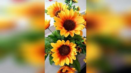 谁知道向日葵的花语是什么? 代表的意义又是什么? ……