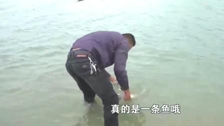 阿烽出来找狗,想不到却在海边看到大家伙,鞋都不脱直奔下海!