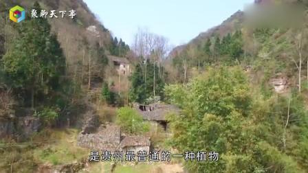 贵州深山发现一山洞,女生看了会脸红,网友:原来是这样!