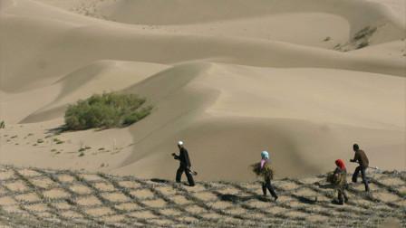 """神奇的""""中国魔方"""",能使沙漠缩小,全球多国都在使用!"""
