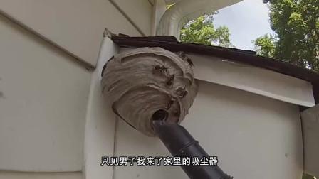巨大马蜂窝如何处理?吸尘器和冷冻剂都用上了,马蜂:发生了什么?